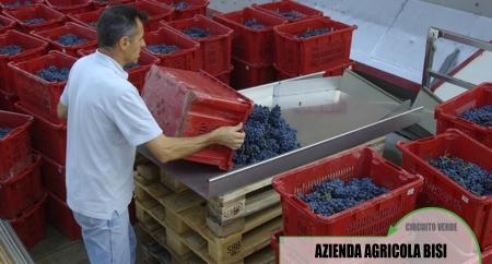 Azienda Agricola Bisi